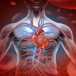 Óptima frecuencia cardiaca