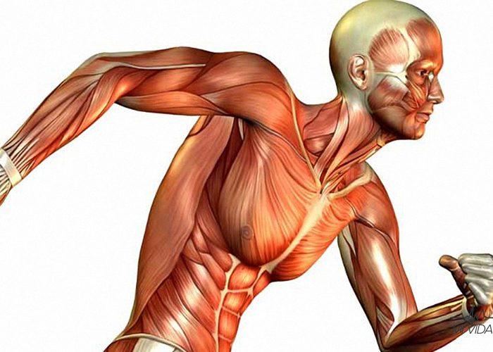 Entrena de acuerdo al tipo de tu fibra muscular